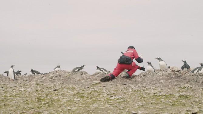 아스파 지역에서 펭귄 둥지를 표시하려고 말뚝을 박는 연구자 - 공승규 제공